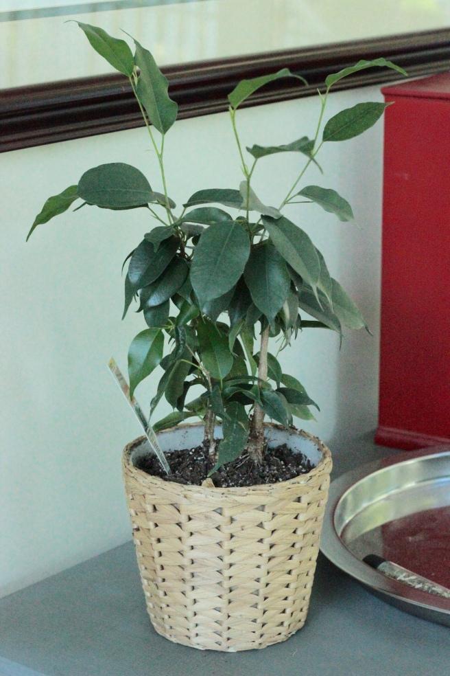 Houseplant1